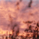 Grass at Sunrise 4 - VideoHive Item for Sale