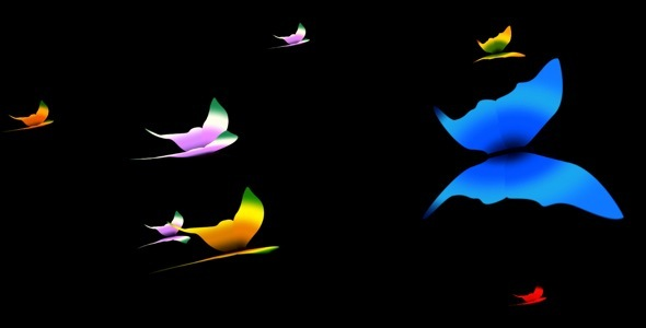 Butterfly Motion Graphics from VideoHive