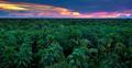 Jungle Canopy - PhotoDune Item for Sale