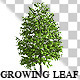 Growing Leaf  - VideoHive Item for Sale