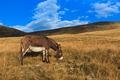 donkey grazing - PhotoDune Item for Sale