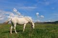 white horse - PhotoDune Item for Sale