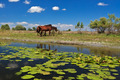 two horses on the edge of a channel of water - PhotoDune Item for Sale