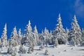 forest with pines in winter - PhotoDune Item for Sale