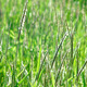 Green Grass Swaying In The Wind - VideoHive Item for Sale