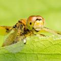 dragonfly macro - PhotoDune Item for Sale