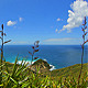 Grass and Ocean - VideoHive Item for Sale