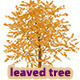 Heart Leaved Tree - GraphicRiver Item for Sale