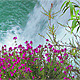 Flowers of the Waterfall - VideoHive Item for Sale