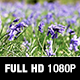 Bluebells in a Field - VideoHive Item for Sale
