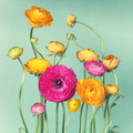 Flower arrangement of ranunculuson - PhotoDune Item for Sale