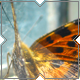 Butterfly On Window-Sill - VideoHive Item for Sale