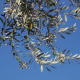 Olive Branch 2 - VideoHive Item for Sale