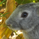 Rabbit - Close Up - VideoHive Item for Sale