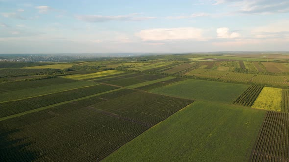 Beautiful Aerial View of Green Agricultural Field on Sunrise