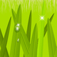 Morning Grass - GraphicRiver Item for Sale