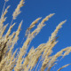High Grass and Sky - VideoHive Item for Sale