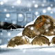 its-snowtime! - VideoHive Item for Sale