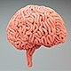 Brains Surface Growth - VideoHive Item for Sale