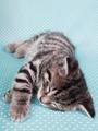 A cute kitten sleeping peacefully - PhotoDune Item for Sale