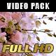 Gorgeous Floral Arrangement (3-Pack) - VideoHive Item for Sale