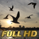 Birds Flying Near Waterfront - VideoHive Item for Sale