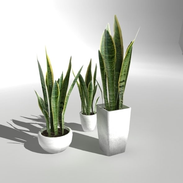 Plant CG Textures & 3D Models from 3DOcean