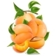 Apricots with Green Leaves - GraphicRiver Item for Sale