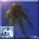 Palm Tree in Wind - VideoHive Item for Sale