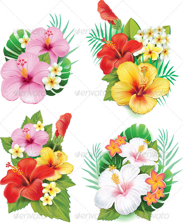 Frangipani Graphics Designs Templates From Graphicriver