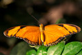 Julia Butterfly - PhotoDune Item for Sale