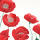 Field of Red Poppies  - GraphicRiver Item for Sale