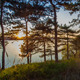 Spring Forest At Sunset - VideoHive Item for Sale