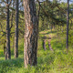 Road In The Coniferous Forest, Slider - VideoHive Item for Sale
