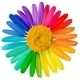 Vector Multicolored Daisy Flower Isolated - GraphicRiver Item for Sale