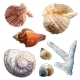 Set of Sea Shells And Coral - GraphicRiver Item for Sale