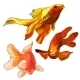 Set of Gold Fish - GraphicRiver Item for Sale