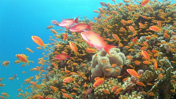 Tropical Fish on Vibrant Coral Reef 768