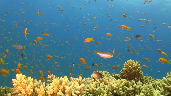 Colorful Fish on Vibrant Coral Reef 770