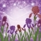 Flowers Iris and Ipomoea Contours