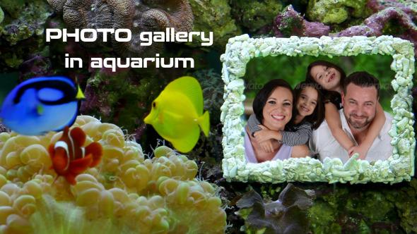 Photo Gallery in Aquarium