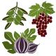 Fruits Illustrations - GraphicRiver Item for Sale