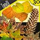 Autumn Leaves & Pine Cones | Bundle - GraphicRiver Item for Sale