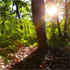 Morning In The Forest 5 - VideoHive Item for Sale