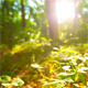 Morning In The Forest 9 - VideoHive Item for Sale