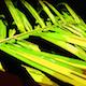 Palm Leaf - GraphicRiver Item for Sale