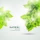 Natural Leaves Vector - GraphicRiver Item for Sale