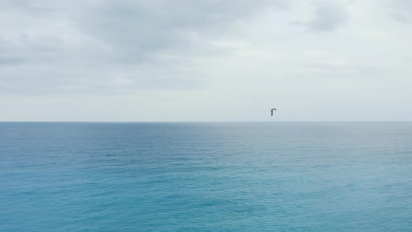 Tracking a seagull on the Ocean