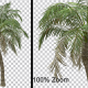 Breezy Palm Tree - Alpha Channel - VideoHive Item for Sale