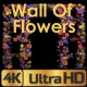 Wall Of Growing Flowers - VideoHive Item for Sale